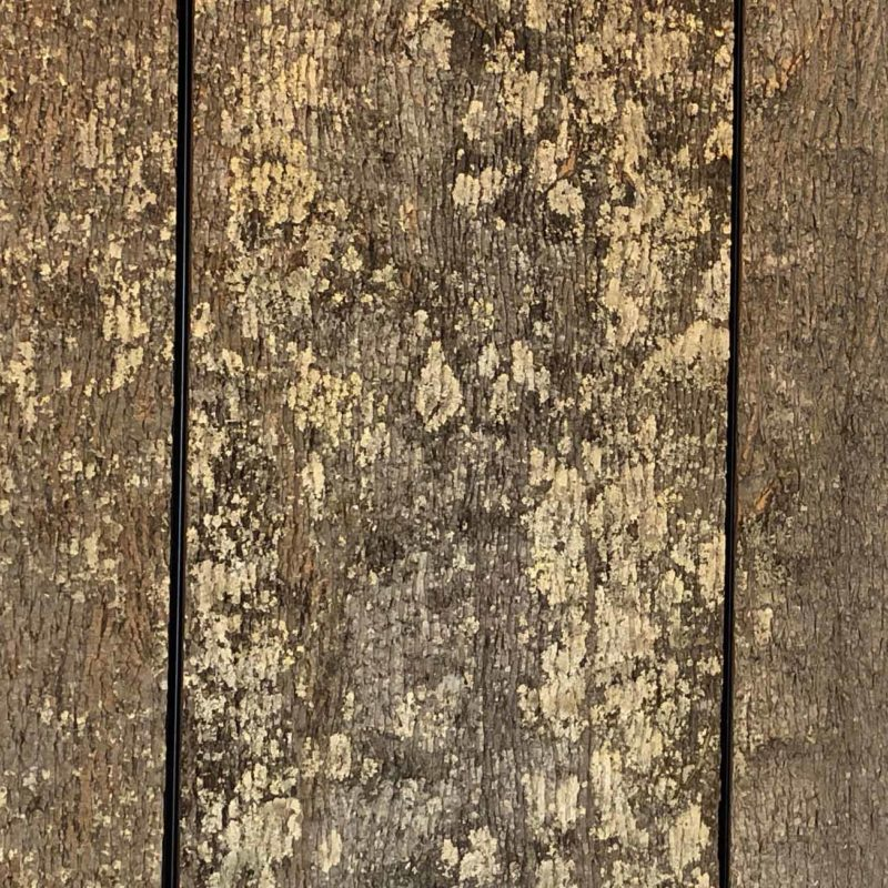 bark covered architectural panel